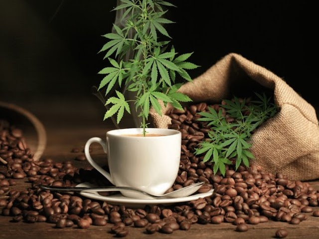 cannabis-infused-coffee-consumers-grow-wise-to-health-benefits-of-marijuana