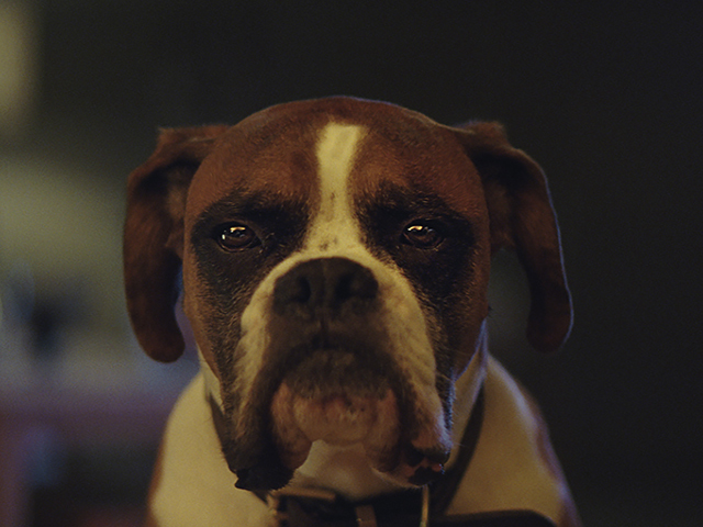 buster-the-boxer-john-lewis-christmas-ad-051