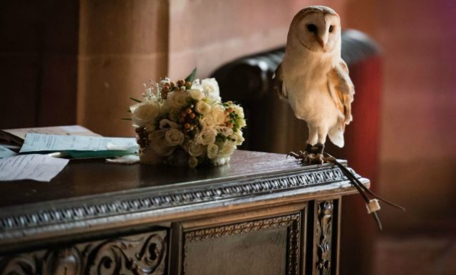 Wedding Photographer Captures Owl 'Attacking' Best Man
