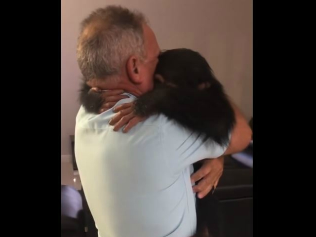 Chimp Reunited With Couple Who Raised Him Goes Nuts [Video