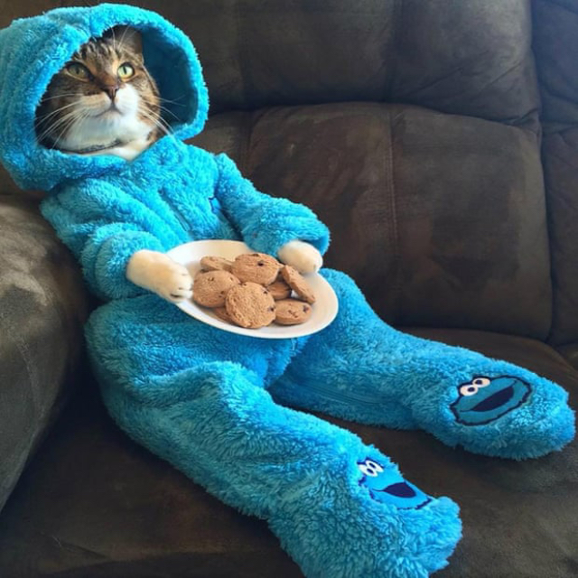 State Department sends out email featuring 'Cookie Monster' cat