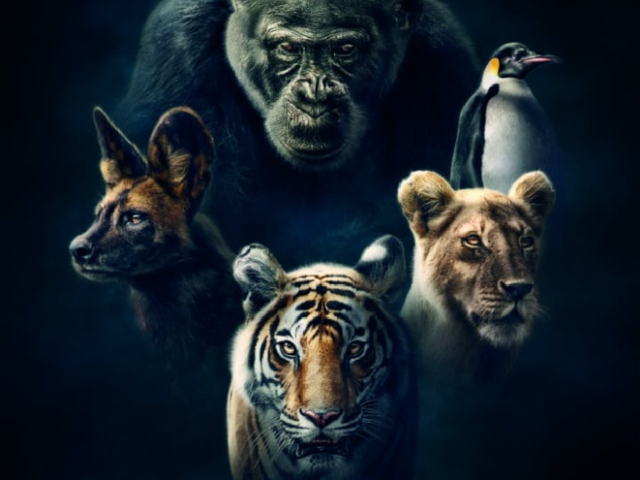 There's Already Been Serious Drama With Attenborough's New