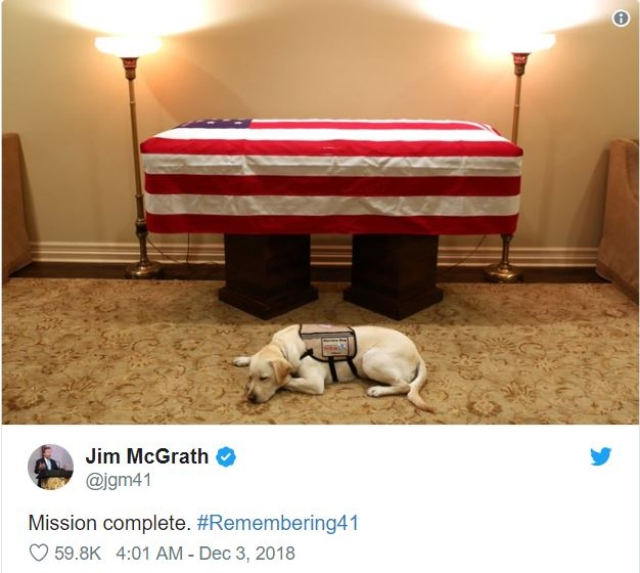 A Photograph Of Late George H.W. Bush's Dog Is Utterly Heartbreaking