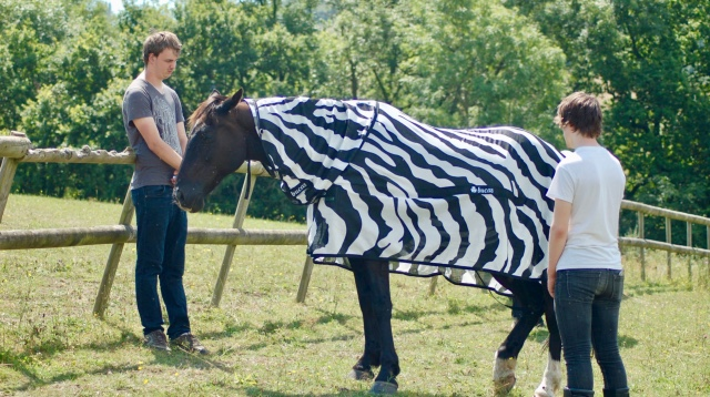Scientists Think They've Finally Solved The Mystery Of Why Zebras Have Stripes