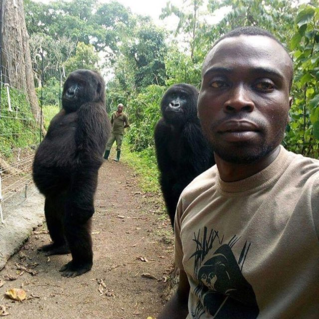 The Viral Gorilla Selfie That Everyone's Talking About